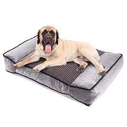 cama ortopédica para perro