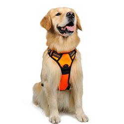 arnes de entrenamiento para correr con perros