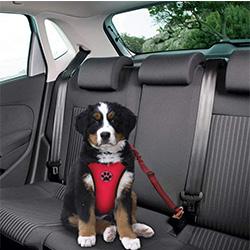 arnes para perro coche con cinturon de seguridad