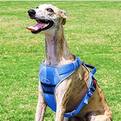 arnes deportivo de entrenamiento para perros