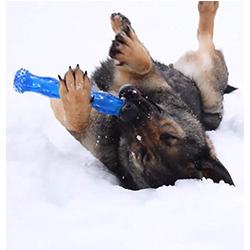 juguetes para limpiar los dientes de los perros