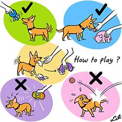 juguetes para entretener a perros