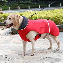 chubasquero perro pequeño