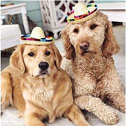 gorras perros