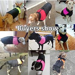 abrigos de perros