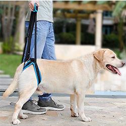 arnes ortopedico perro
