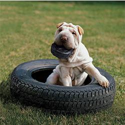 juguete resistente para perros para morder