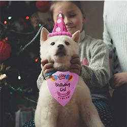 gorrito de cumpleaños para perro