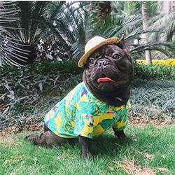Meioro-camisa-hawaiana-para-perro-2