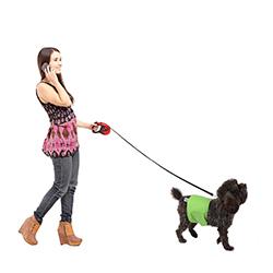 pañales de perro