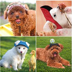 gorras de perros