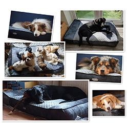 cama para perros con artritis