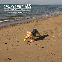 pelotas duraderas para perros