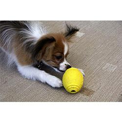 juguetes para entrenar cachorros