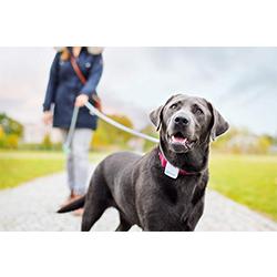 localizador gps para perros comprar