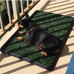 orinal portatil para perros