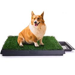 cajas de arena para perros
