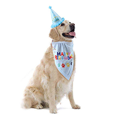 sombrero feliz cumpleaños para perros