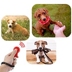 clicker de adiestramiento para perros