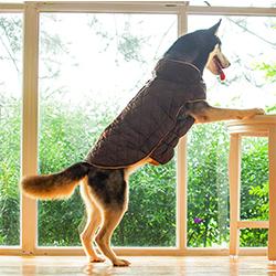 abrigos de lana para perros