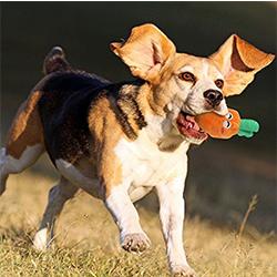 juguetes para perritos
