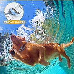 collares antiladridos de perros