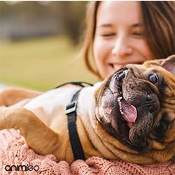 pipeta antipulgas para perros
