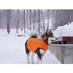 chaleco de seguridad para perros