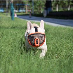 bozal cesta para perros