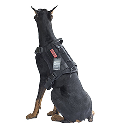 chaleco de caza de jabali para perros