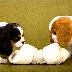 huesos dentales para perros