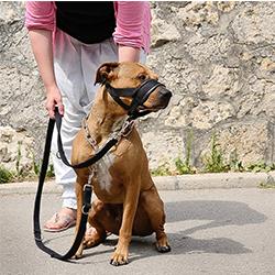 bozales antiladridos para perros
