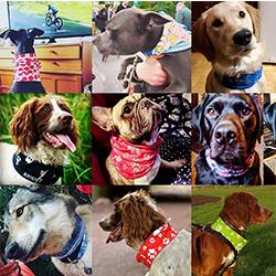 bufandas para perro