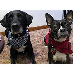 bandanas perro