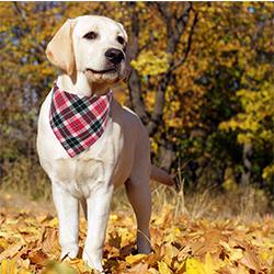 perros con pañuelos