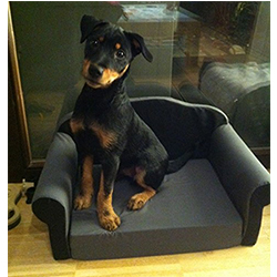 sofa de calidad para perros