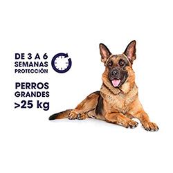 pipetas antipulgas para perros