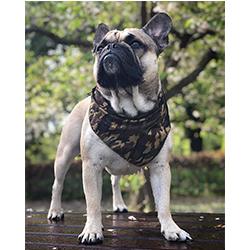 bandana-militar-para-perros-1
