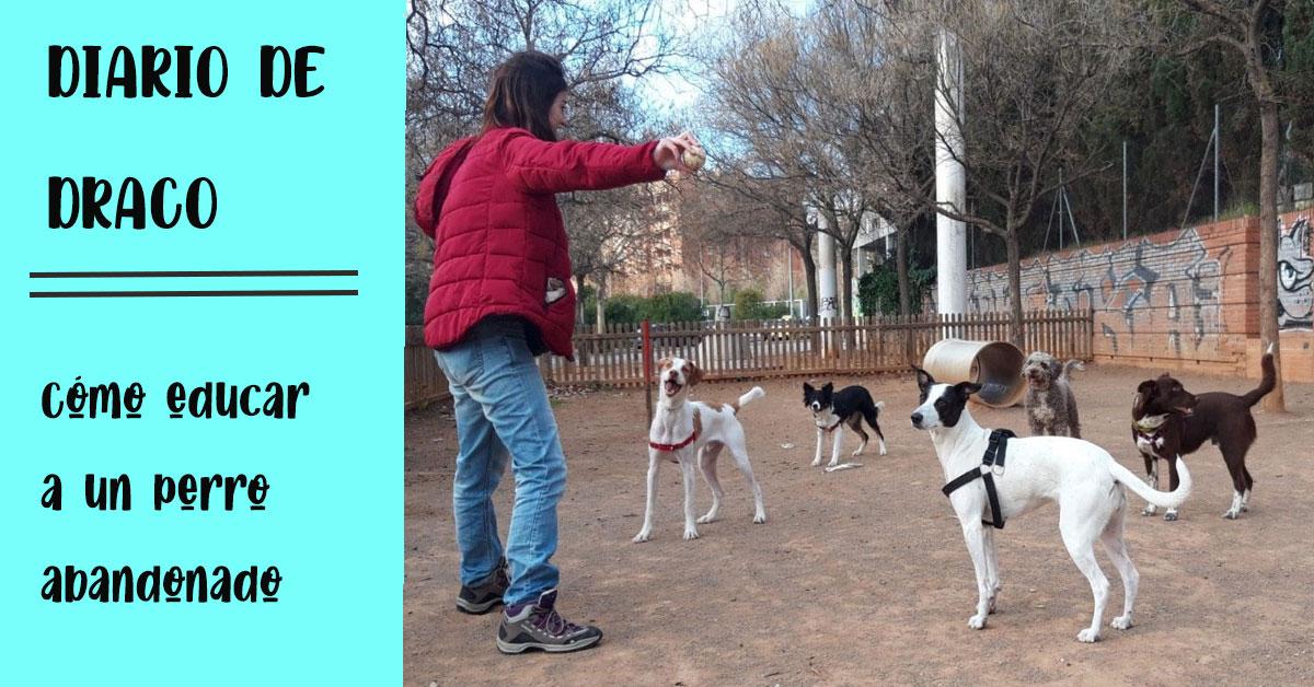 cómo educar a un perro abandonado paso a paso
