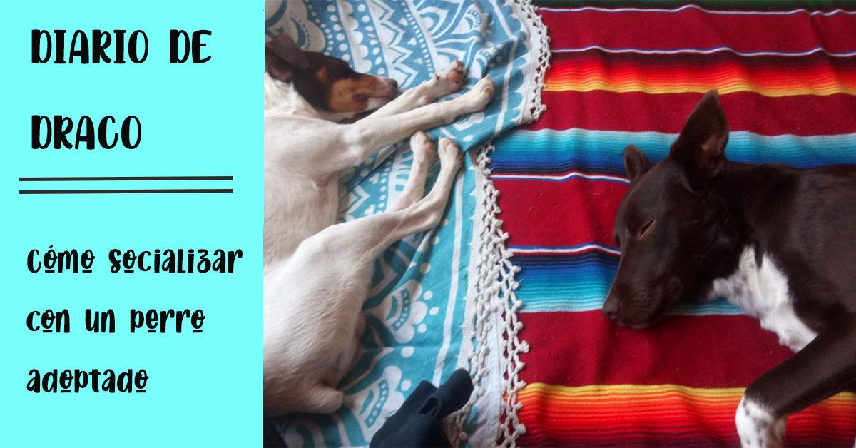 como socializar a un perro adoptado