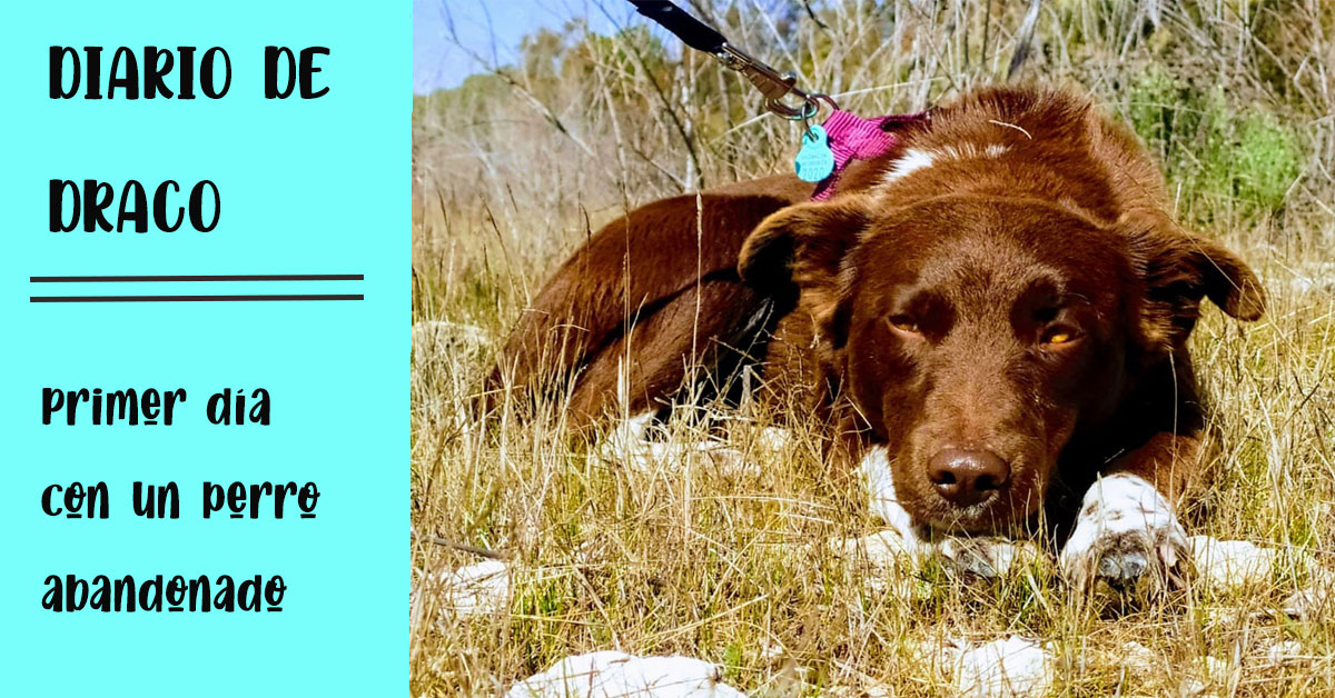 pasar el primer día con un perro abandonado y no morir en el intento