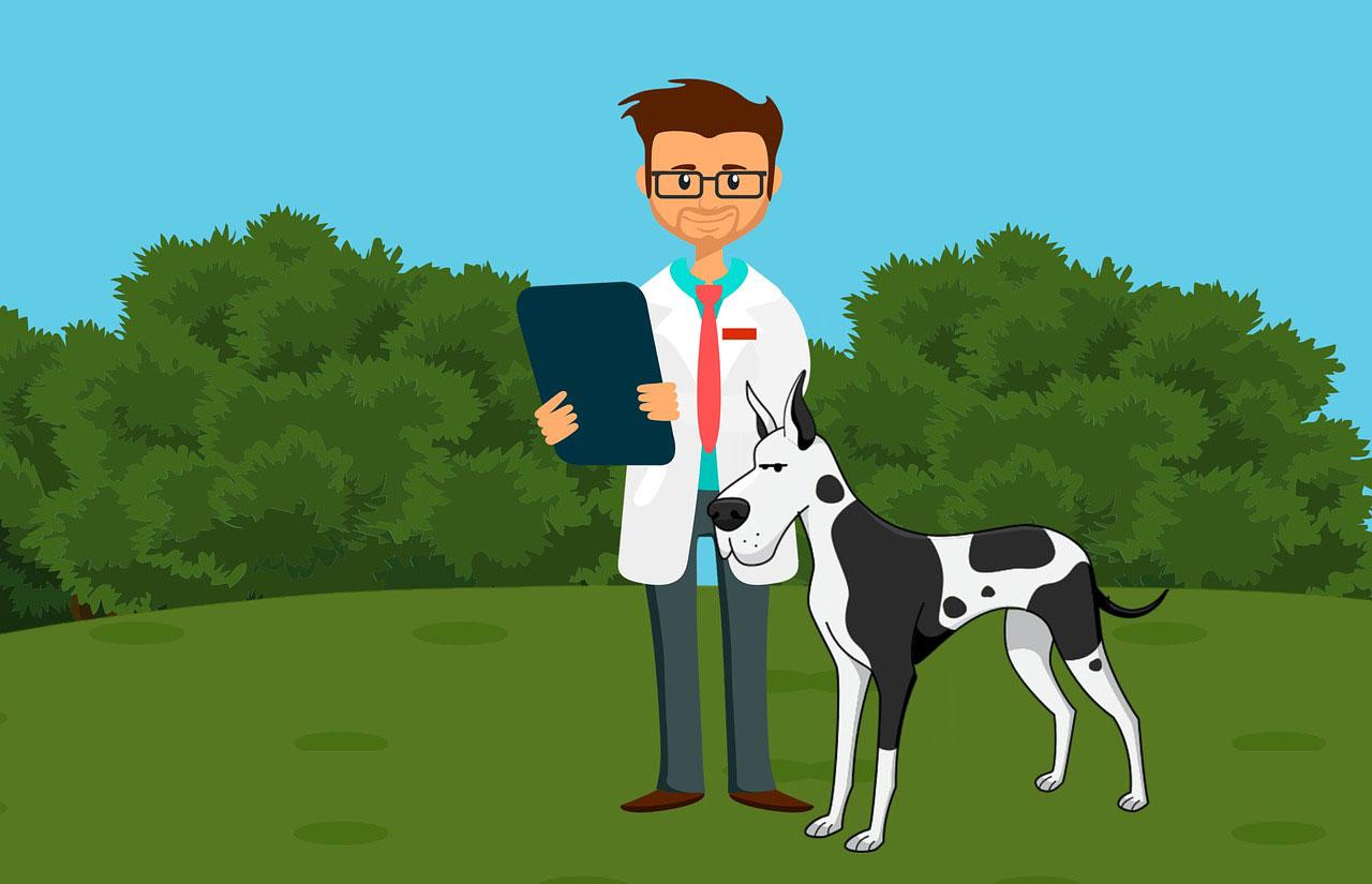 ¿Funciona la acupuntura para perros?